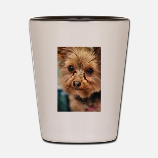 Funny Yorkshire terriers Shot Glass