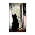 Curious black kitten 35x21 Wall Decal