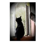 Curious black kitten Postcards (Package of 8)