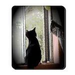 Curious black kitten Mousepad