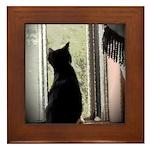 Curious black kitten Framed Tile
