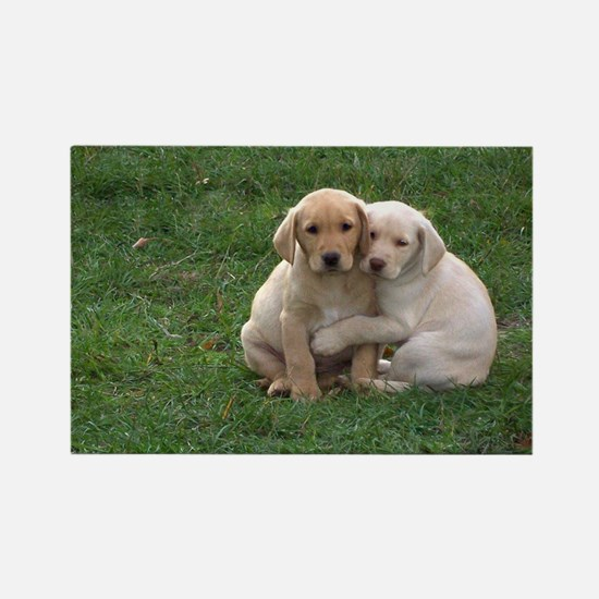 Yellow Lab Pups Rectangle Magnet