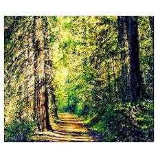 Sunlit Trail Poster