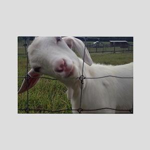 Got Goat? Rectangle Magnet