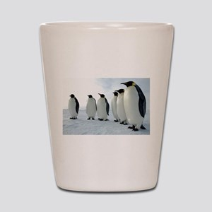 Lined up Emperor Penguins Shot Glass