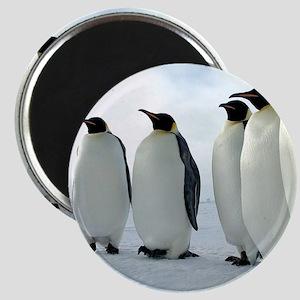 Lined up Emperor Penguins Magnets