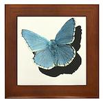Blue Moth Framed Tile