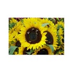 Bee Dance On A Sunflower Day Rectangle Magnets