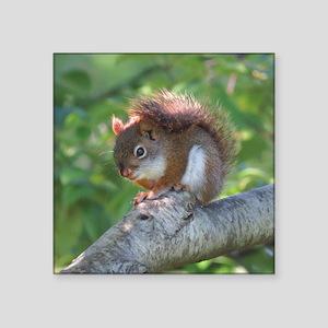 "Red Squirrel Square Sticker 3"" x 3"""
