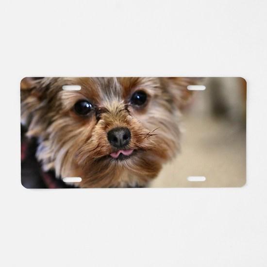 Cute Yorkshire terriers Aluminum License Plate