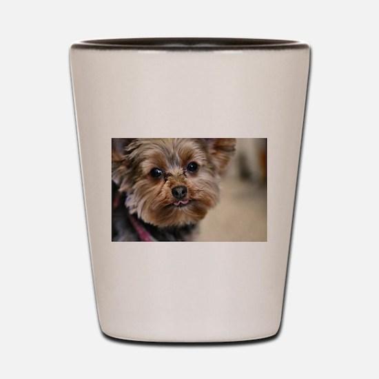 Unique Yorkshire terriers Shot Glass