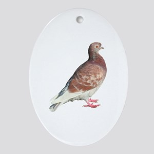 Red Pigeon (Isolated) Oval Ornament