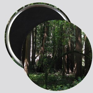 Muir Woods, California Magnets
