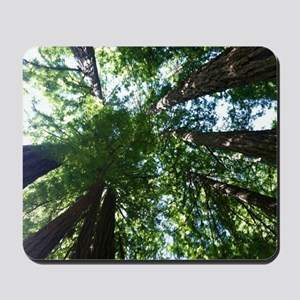 up into treetops Mousepad