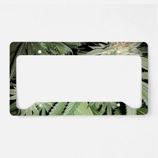 Cannabis Kush Plant License Plate Holder