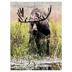 Munching Moose Poster