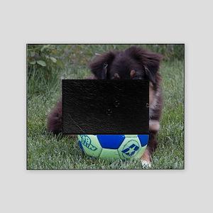 Australian Shepherd Pup Picture Frame