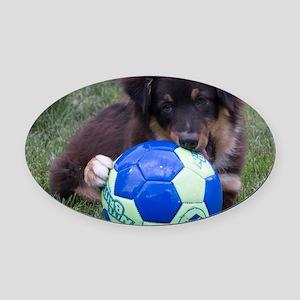 Australian Shepherd Pup Oval Car Magnet