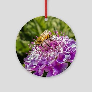 Honeybee on a Pincushion Flower Round Ornament
