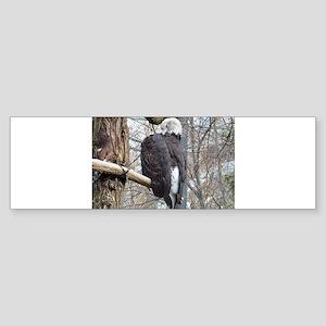 big bird Sticker (Bumper)