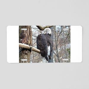 big bird Aluminum License Plate