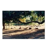 Komodo Dragons Postcards (Package of 8)