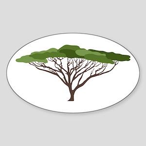 Acacia Tree Sticker