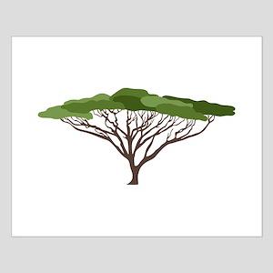 Acacia Tree Posters