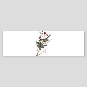 Black-capped Chickadee Bumper Sticker