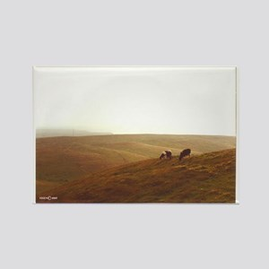 Point Reyes dairy pasture Rectangle Magnet
