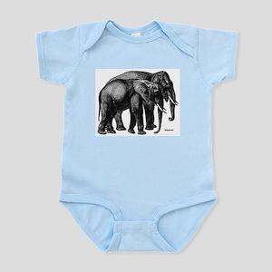 Elephants Infant Creeper