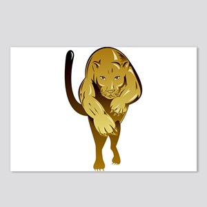 Lioness Postcards (Package of 8)