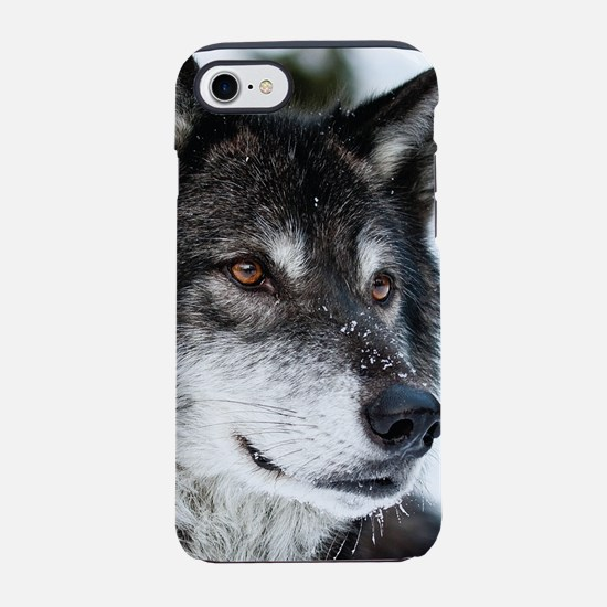Beautiful Grey Wolf iPhone 8/7 Tough Case