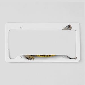 Diamondback Terrapin License Plate Holder