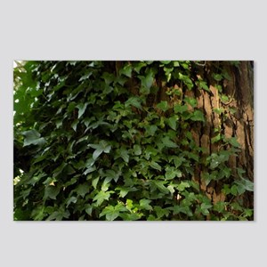 Ivy Postcards (Package of 8)