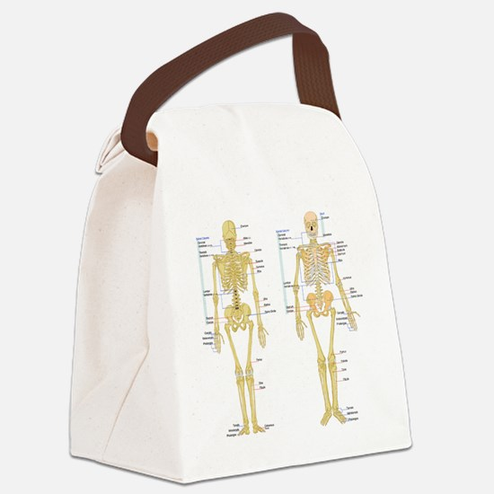 Cute Anatomy Canvas Lunch Bag
