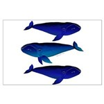 3 Bowhead Whales Posters