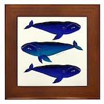 3 Bowhead Whales Framed Tile