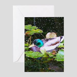 Mallard duck in a pond Greeting Cards
