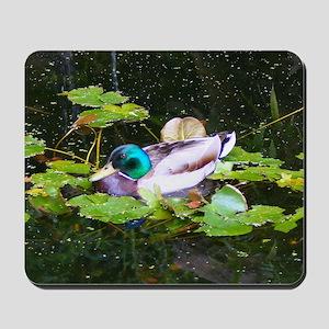 Mallard duck in a pond Mousepad
