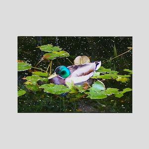 Mallard duck in a pond Magnets