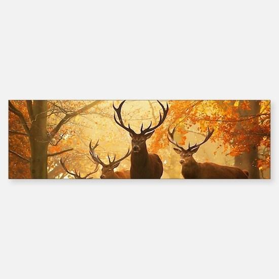 Deer In Autumn Forest Bumper Car Car Sticker