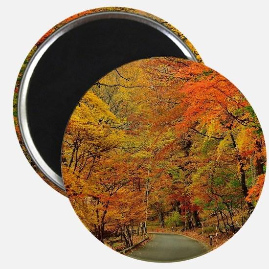 Park At Autumn Magnets