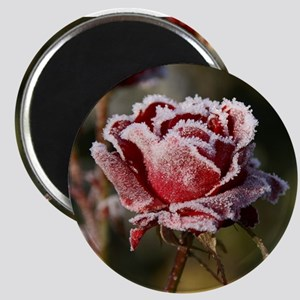 Rose With Frost On It Magnets