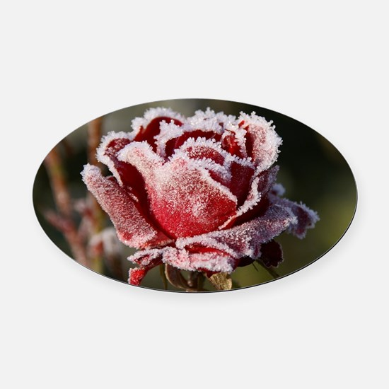 Rose With Frost On It Oval Car Magnet