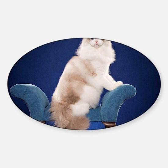 Cute Ragdoll Sticker (Oval)