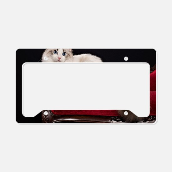 Cute Ragdoll cats License Plate Holder