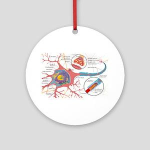 Neuron Cell Diagram Round Ornament