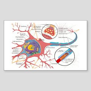 Neuron Cell Diagram Sticker
