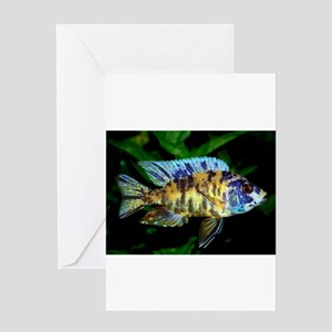 Aulonocara Cichlids Greeting Cards